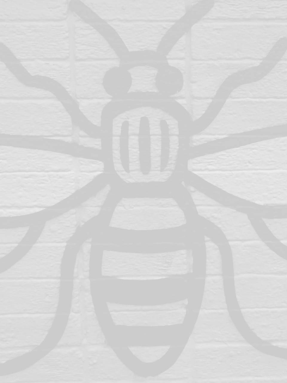 seo company in manchester image of manchester bee
